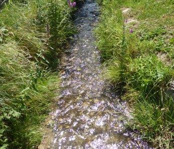 Ruschbach Grenzach-Wyhlen; niedriger Pegelstand