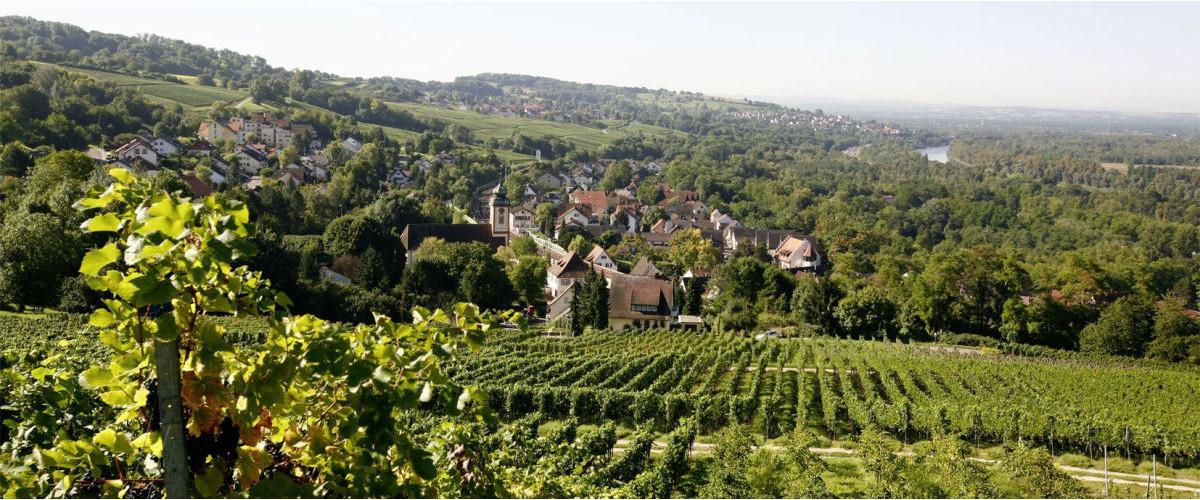 Reblandschaft bei Bad Bellingen