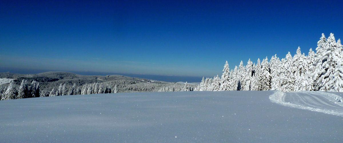 Bild Schneelandschaft Feldberg