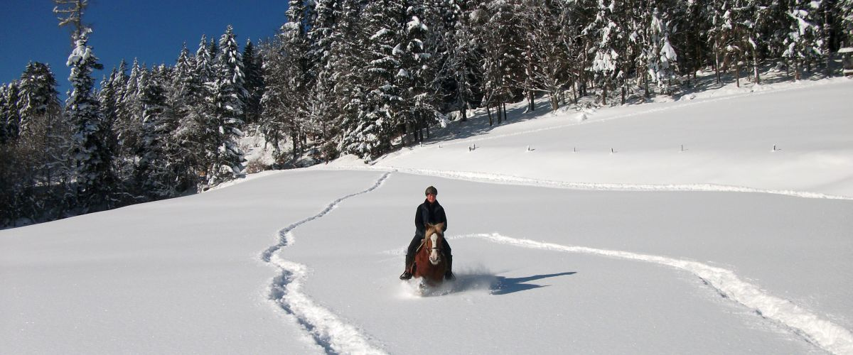 Schwarzwälder Pferd im Schnee