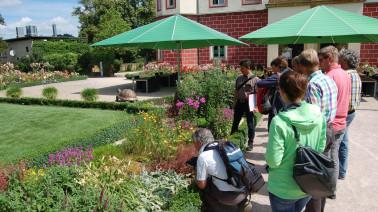 Die Exkursionsteilnehmer begutachten eine repräsentative Staudenrabatte im Schlossgarten- eine gute Alternative zur Wechselflorbepflanzung