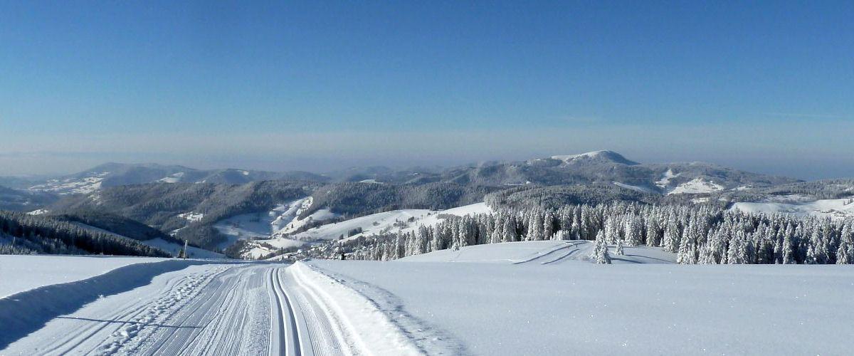 Bild Loipen im Schnee