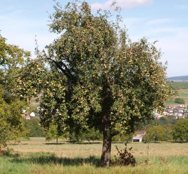 Streuobst (c) Landratsamt Lörrach