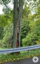 Tote und geschädigte Bäume entlang der L 123 bei Wieden gefährden die Verkehrssicherheit: Extreme Zwieselbildung (Vergabelung unter Druck) mit großflächigem Rindenschaden (Bild 2)